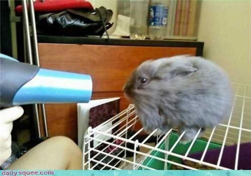 bunny cute floof Fluffy Friday - 4170612480