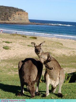 cute kangaroo - 4171162624