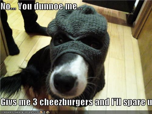 Cheezburger Image 4171192832