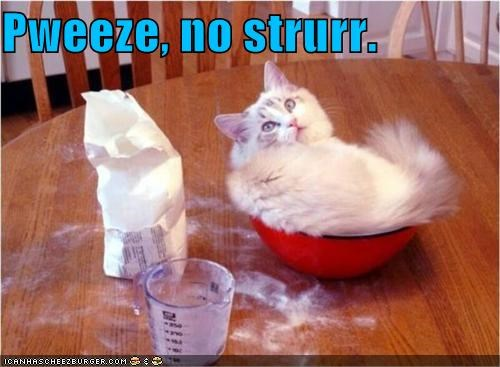 Cheezburger Image 4171317248