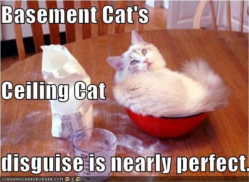 Cheezburger Image 4171386880