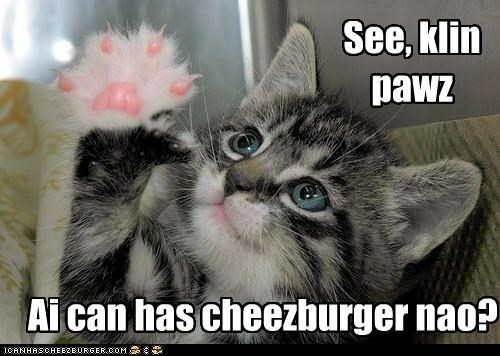 Cheezburger Image 4171595520