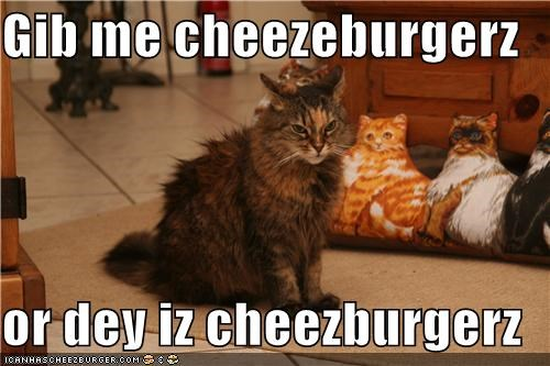 Cheezburger Image 4171651584