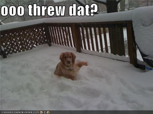 accusing,golden retriever,hit,question,snowball,threw,upset,who
