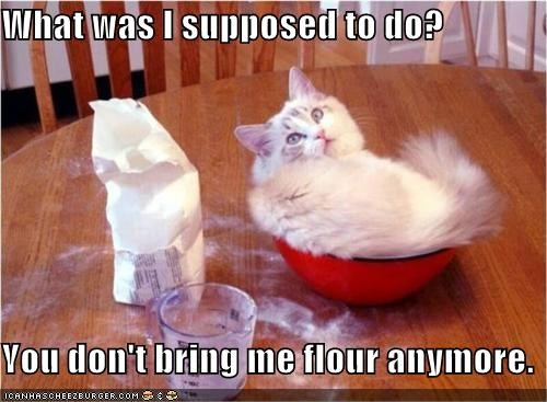 Cheezburger Image 4171757568