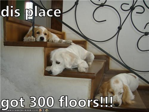 300 floors,climbing,cocker spaniel,cute,exhausted,mixed breed,puppies,puppy,sleepy,stairs,tired