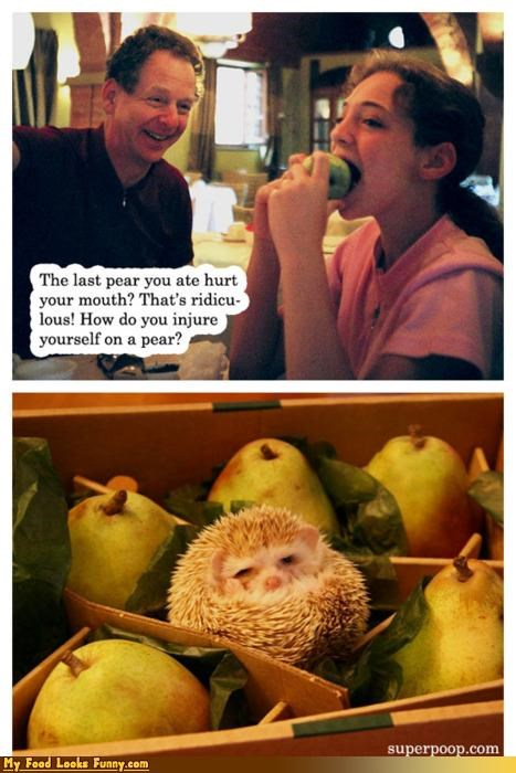 cute,fruits,fruits-veggies,hedgehog,hurt,injure,mouth,pear,spines