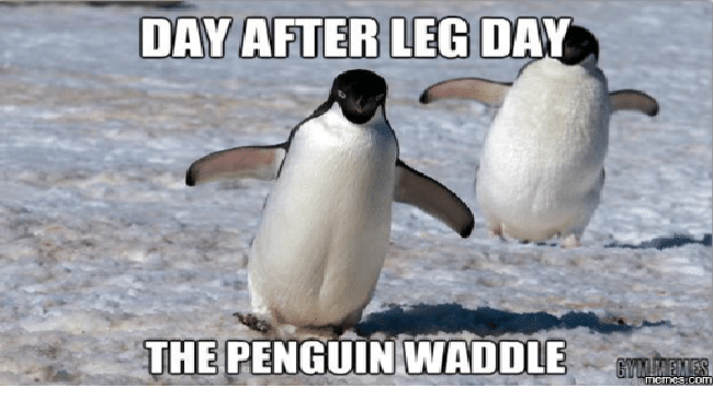 a funny list of penguin memes