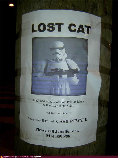 awesome Lost Cat poster star wars stormtrooper wtf - 4172936960