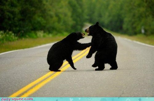 acting like animals,bear,bears,begging,black bear,cake,lying,responsibility,road,salmon,truck