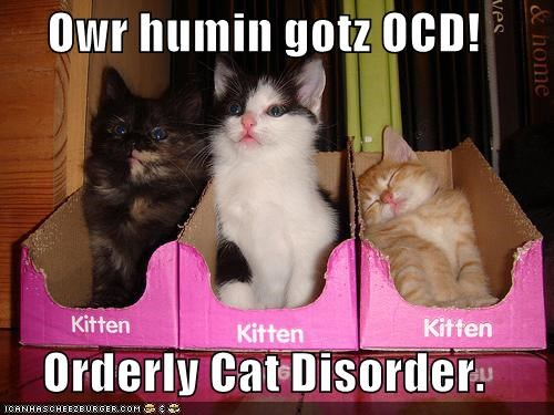 acronym caption captioned cat Cats cute kitten ocd orderly sorting