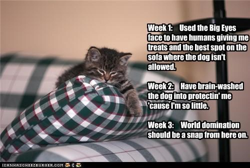 caption captioned cat diary kitten one plan three two week world domination - 4174139648
