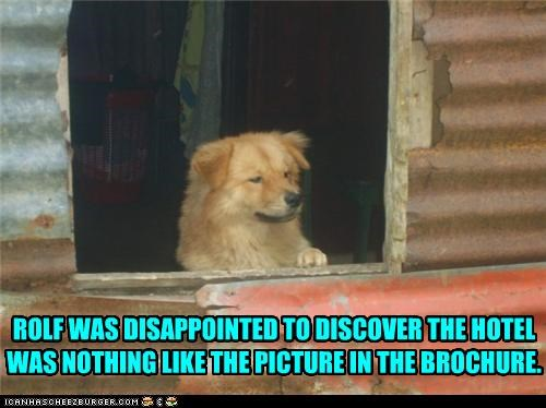 brochure chao disappointed disappointment discovery hotel misleading mixed breed - 4174476800
