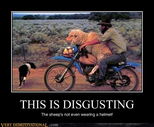 THIS IS DISGUSTING The sheep's not even wearing a helmet!