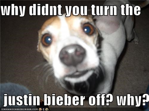 Hall of Fame jack russell terrier justin bieber question Sad upset why