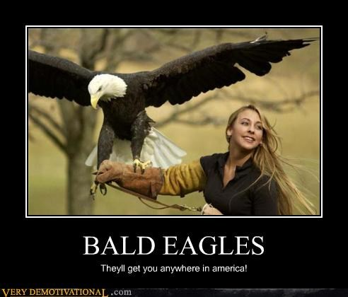 BALD EAGLES Theyll get you anywhere in america!