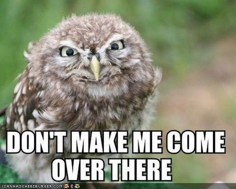 angry caption captioned dont-make-me-come-over-there dont-mess-with-me grumpy Owl owls threats - 4175088128