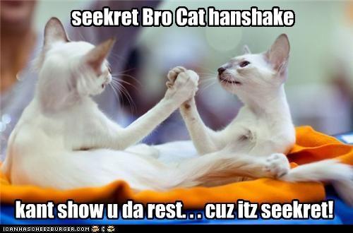 seekret Bro Cat hanshake kant show u da rest. . . cuz itz seekret!