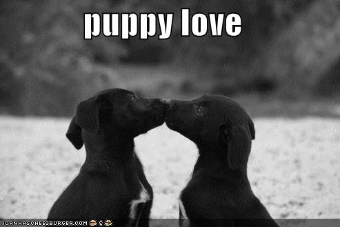 cute Hall of Fame kissing love puppies puppy puppy love sweet whatbreed - 4175749632
