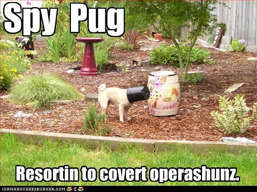 covert ops FAIL flower pot Hall of Fame last resort pug spy stealth undercover - 4176272128