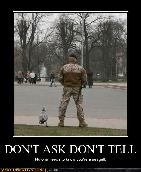 dont-ask-dont-tell gay jokes seagull-military - 4176556032