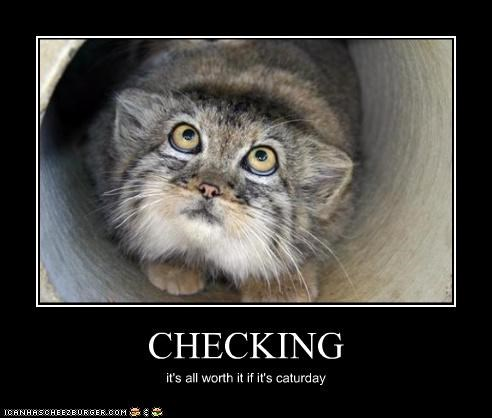 CHECKING it's all worth it if it's caturday