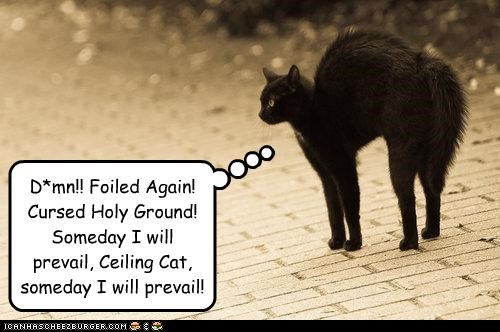 D*mn!! Foiled Again! Cursed Holy Ground! Someday I will prevail, Ceiling Cat, someday I will prevail!