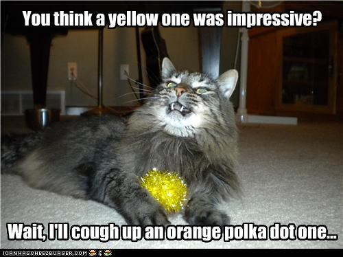 caption,captioned,cat,challenge,hairball,impressive,mang coon,orange,polka dot,trick,yellow