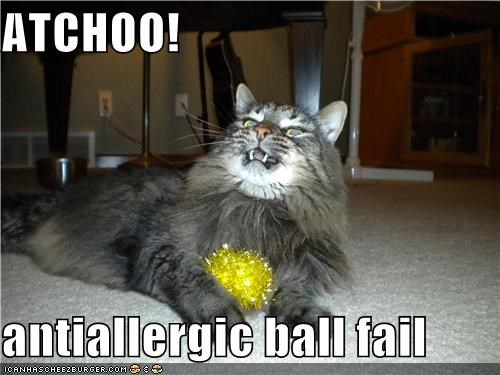 Cheezburger Image 4177726464