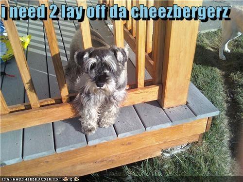 Cheezburger Image 4177790976
