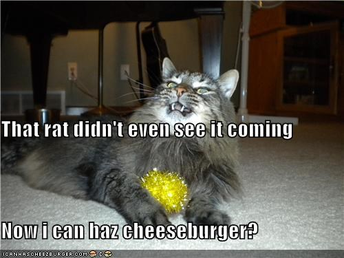 Cheezburger Image 4177889280