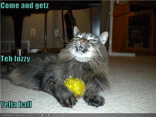 Cheezburger Image 4177964288