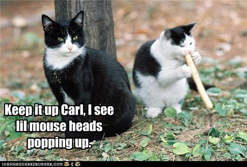 Keep it up Carl, I see lil mouse heads popping up.
