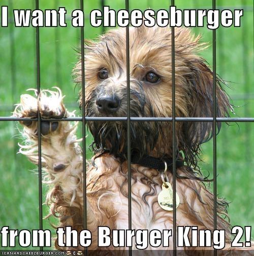 Cheezburger Image 4178231296