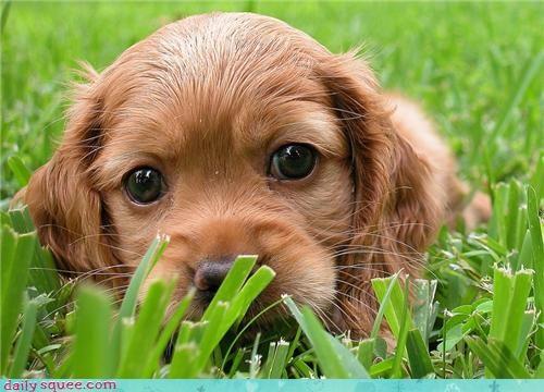 baby cute puppy tiny - 4178399232
