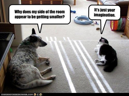 cat,confused,division,explanation,german shepherd,imagination,mixed breed,personal space,question,room,smaller