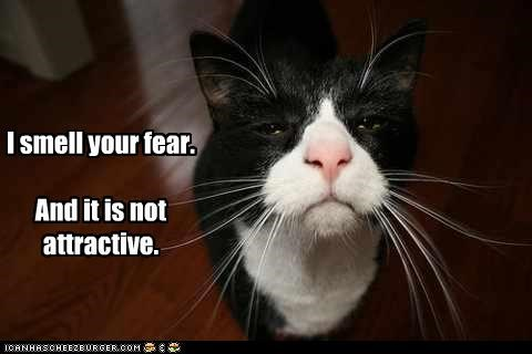 caption captioned cat disgusted fear smell - 4178925312