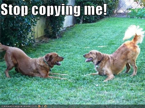 copying dogs golden retriever golden retrievers imitation stop two - 4179038464