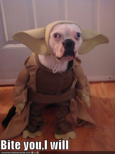 costume dogs Movies and Telederp star wars use the hurrrr yoda - 4179068672