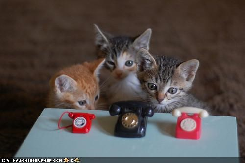 cyoot kitteh of teh day,kitten,phones,telephone,toys