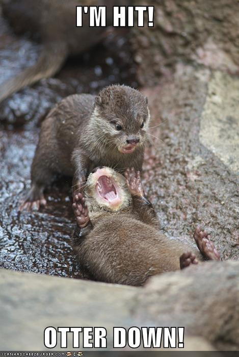 caption captioned hit otter pain shouting war - 4179233024