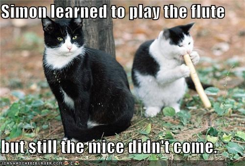caption captioned cat Cats didnt work FAIL flute learning mice not coming pied piper - 4179248640