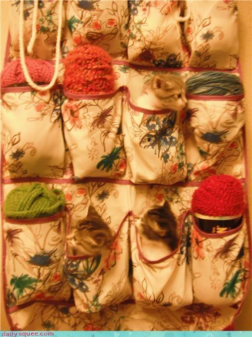 cat kitten knitting pet reader squee yarn - 4179367168