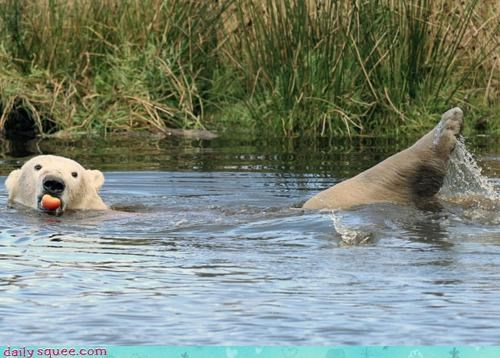 acting like animals apple Awkward candid funny me time Photo polar bear private swimming - 4179481088