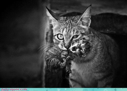 acting like animals baby cat cub cute do not want lynx motherhood whining wild wildcat