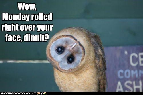 caption captioned commentary condescending head mean Owl question rhetorical sarcasm turned - 4179736832