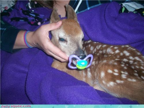 baby,binky,comfort,cute,deer,fawn,love,pacifier,security,suckling,sweet
