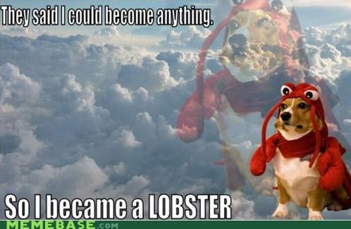 corgi epic lobster Memes - 4179952384