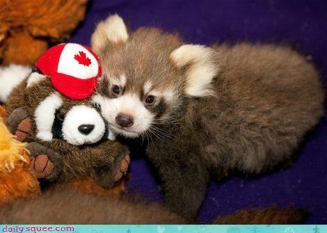baby cute doll red panda - 4180242432