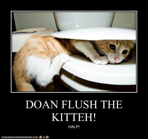 DOAN FLUSH THE KITTEH! HALP!